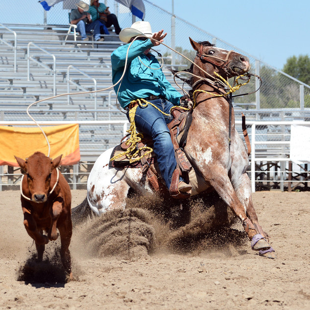 Cowboy roping a calf in a rodeo.jpg