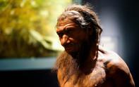 Están creando cerebros del Hombre de Neandertal