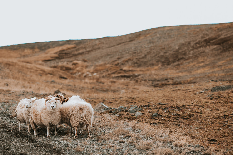Iceland (1170).jpg