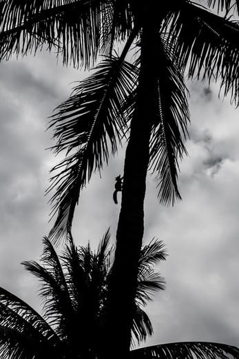 Florida (4).jpg