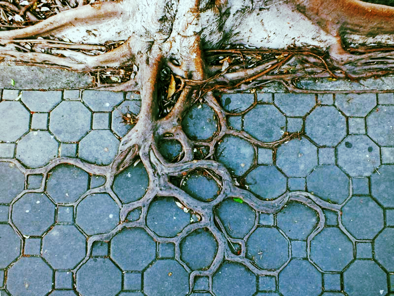 bankok-tree-roots-pattern_edited