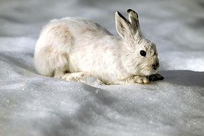 whiterabbit.jpg