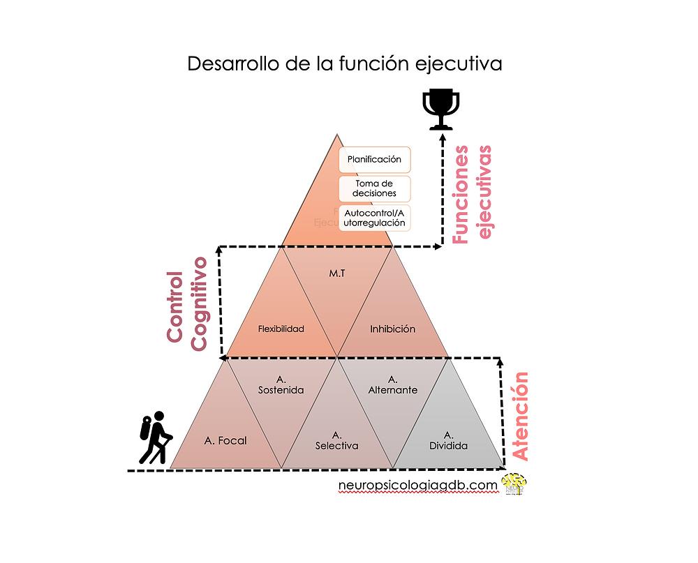 funciones ejecutivas neuropsicologiagdb