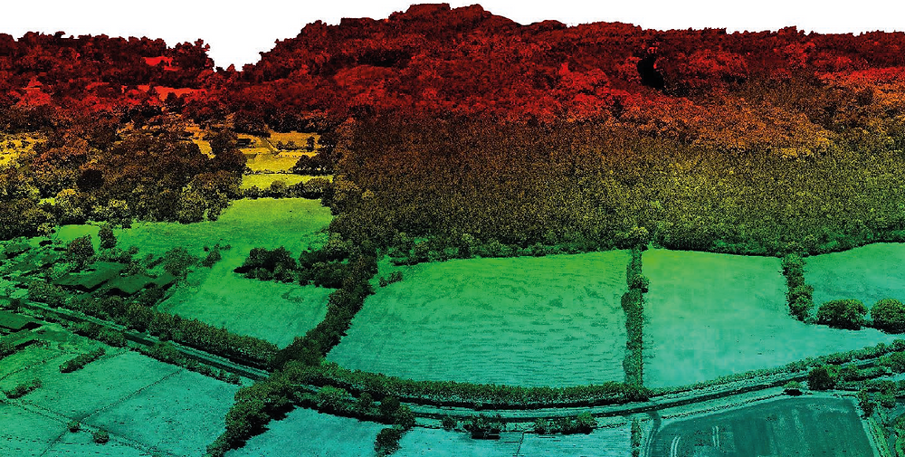 LiDAR point cloud - forest coloured by height