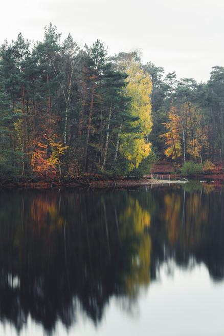 AUTUMN AT THE LAKE  Image 10 of 11 November 2020