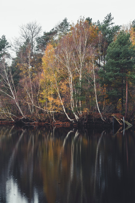 AUTUMN AT THE LAKE  Image 4 of 11 November 2020