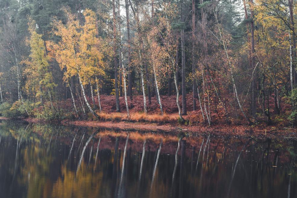 AUTUMN AT THE LAKE  Image 11 of 11 November 2020