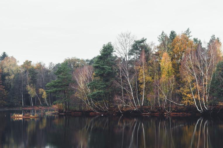 AUTUMN AT THE LAKE  Image 8 of 11 November 2020