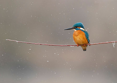 Beautiful colorful kingfisher on the branch.jpg