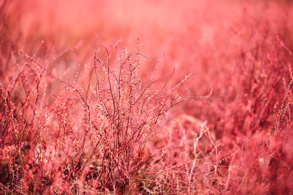 RED PLANET  IMAGE 2 OF 7  Natur Deutschland 2020