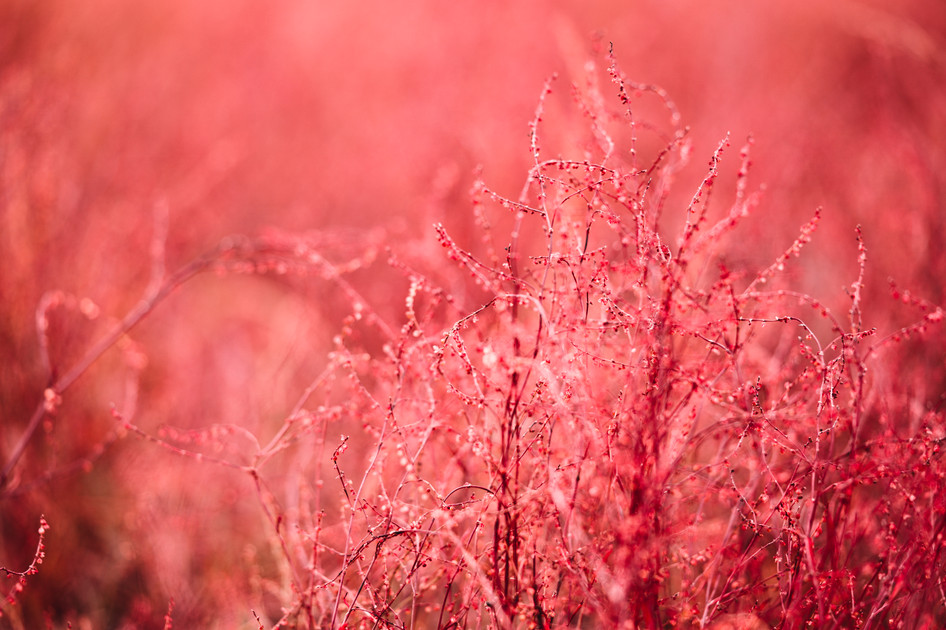 RED PLANET  IMAGE 3 OF 7  Natur Deutschland 2020