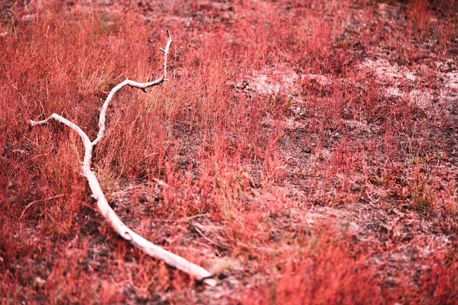 RED PLANET  IMAGE 7 OF 7  Natur Deutschland 2020