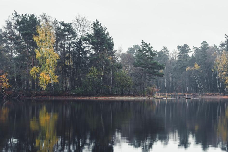 AUTUMN AT THE LAKE  Image 2 of 11 November 2020