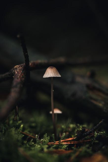 MOCRO FOREST  IMAGE 1 OF 13  Fine art Deutschland 2020