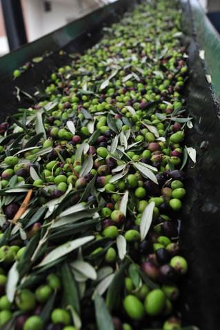 Olio Di Penne - Extra Virgin Olive Oil