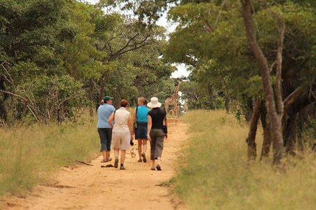 Walking with giraffe and gemsbok.jpg