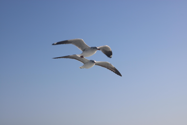 Seagulls, Ferry to Teknaf
