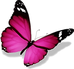 papillon.png