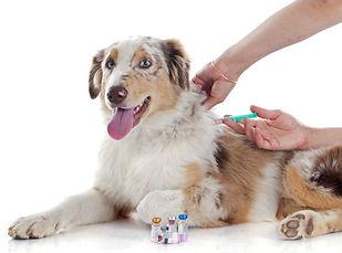εμβολιασμός σκύλου