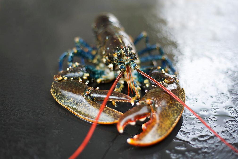 Lobster species image