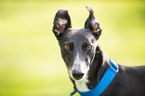 Commercial Pet Portraits