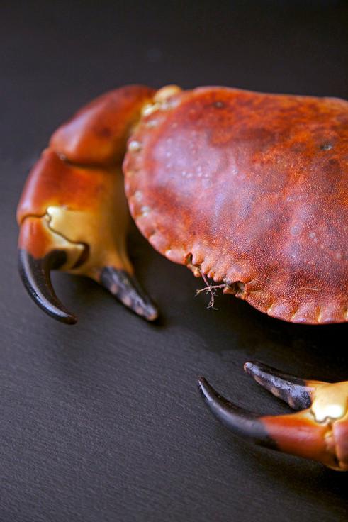 Brown Crab species shot