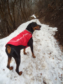 Elvis, styling in a fleece-lined coat, on a snow-packed trail