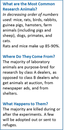 Facts about research animals: the most common animals, where they come from, and what happens to them