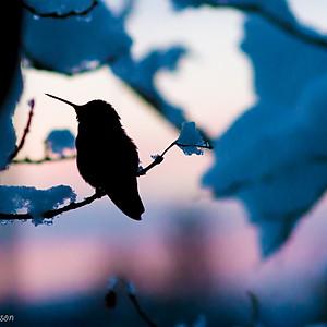 Hummingbirds at Sunset