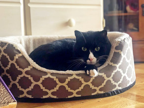 Does your Cat need his own bed?