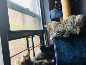 Bird Watching is Great Enrichment for Cats
