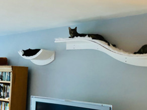 Redfin Blog Repost: How to Prepare Your Home for a Kitty: 14 Tips From the Pros