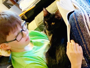 This Past Week: Black Cat Appreciation Day and Take Your Cat to the Vet Day
