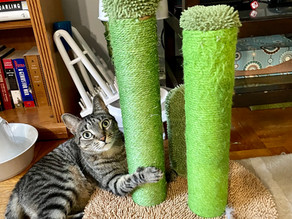 Cactus Scratching Post Review: Invest in a tall sturdy post