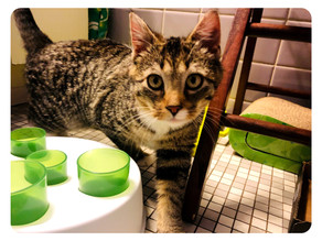 Kitten Fostering: A Life Saving Resource