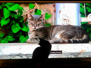 Does Your Cat Watch TV?