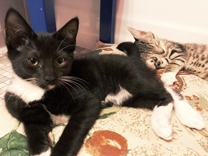 Do cat names matter for adoption?