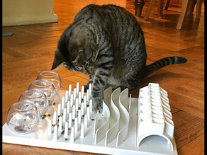 Favorite food puzzles: Trixie Activity Board and Catit 2.0 Tree