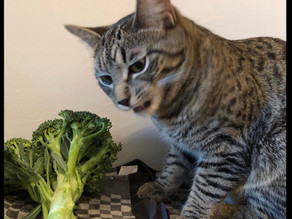 Is It Safe to Give Your Cat Human Food?