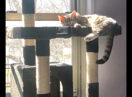 Does Your Cat Have a Spot By a Window?