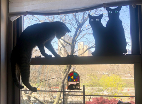 FLY HUNTING - starring Josh, the exceptionally energetic and curious cat.