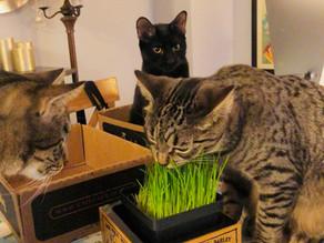 FAQ: Why do Cats Chew Plastic?