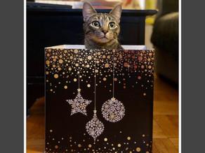 Keeping Cats Safe this Holiday Season