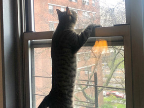 Bored Cat Tip: Attach a Toy to the Wall or Window