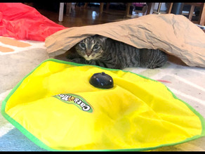 Best Free Cat Toy: Packing Paper!