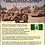 Thumbnail: The White Tribe: Rhodesia's War 1966-1980