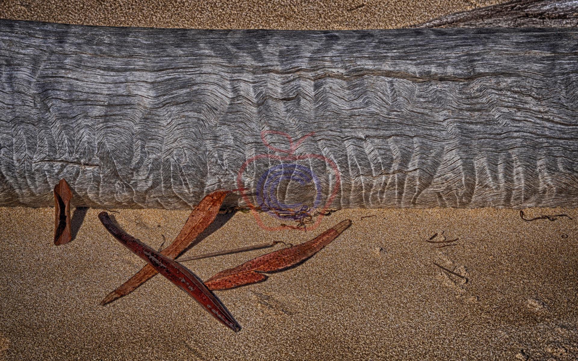 Sea - Log
