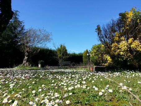 Disfruta de la paz de nuestro jardín