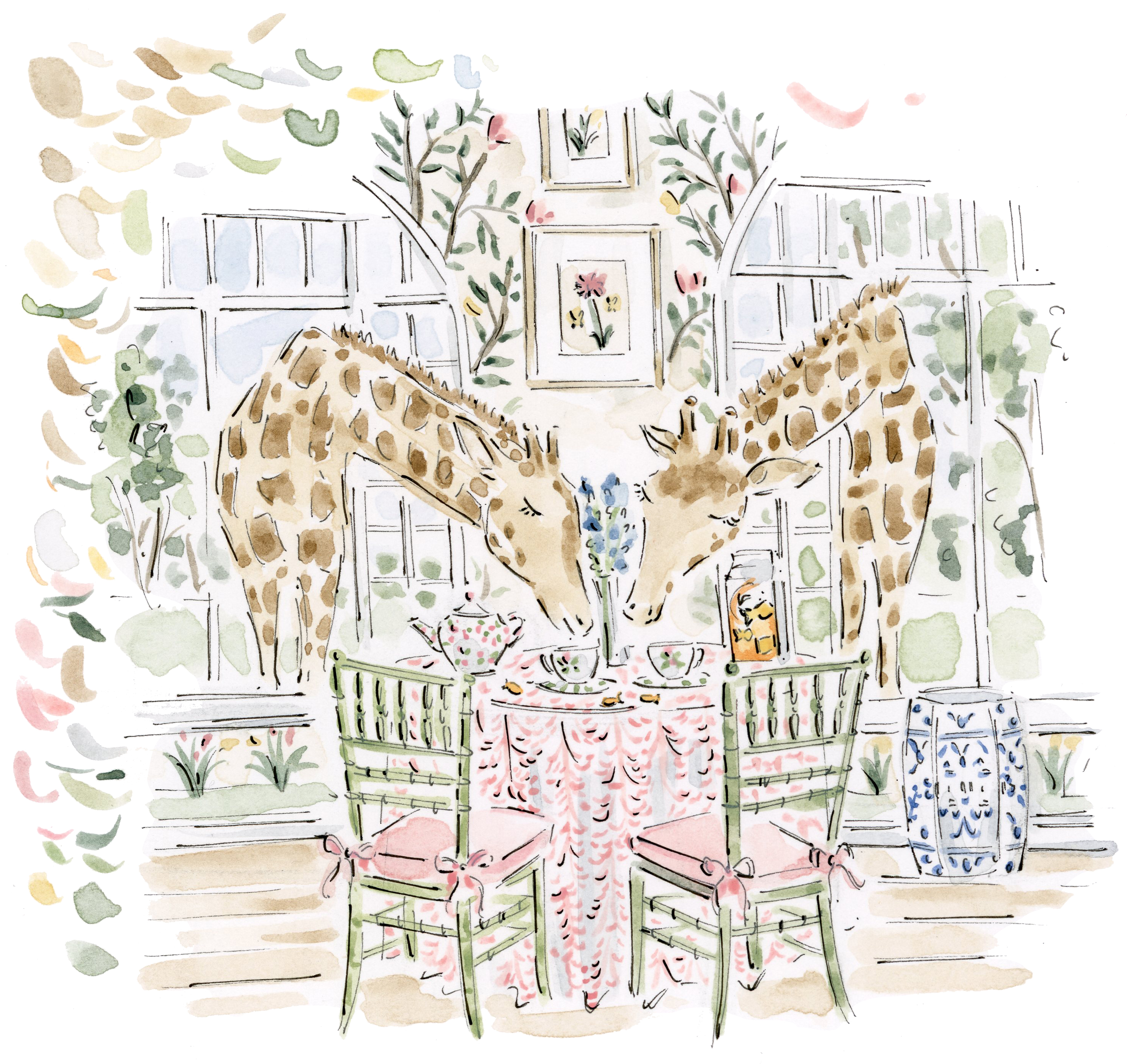 Giraffes having tea