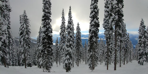 Mountain shot - Revelstoke.jpg
